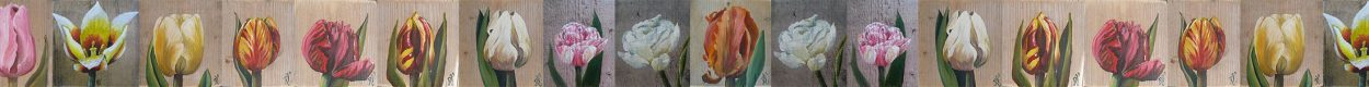 Dutch tulip art