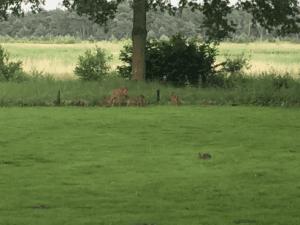 International Earth day 2018, headquarters of Xelboo Dutch art business gifts, Deers in a meadow in the Netherlands