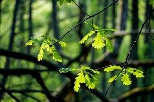 International Earth Day 2018 Plastic pollution green forest fresh leaves Holland Dutch
